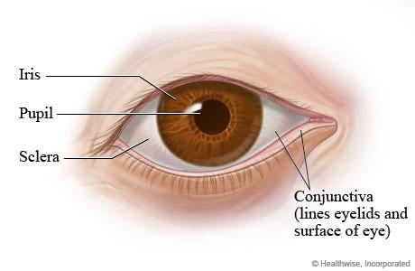 how to make white part o your eye whiteer