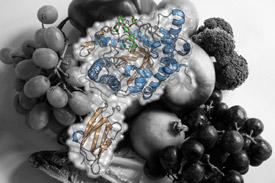 Fiber digesting protein gut bacteria microbiome