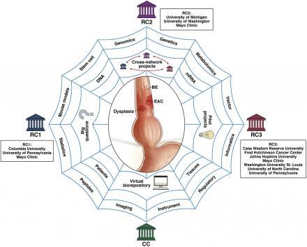 Barrett's Esophagus Translational Research Network (BETRNet):