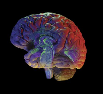 Brain changes seen in veterans with PTSD after mindfulness training ...