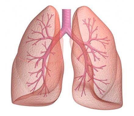 What Rsquo S Lurking In Your Lungs Surprising Findings Emerge