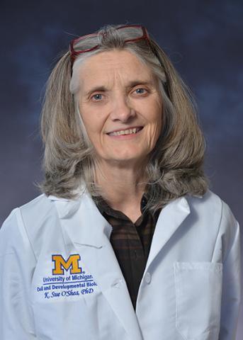 Sue O'Shea Ph.D.
