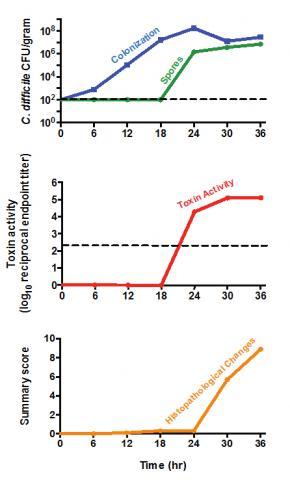 C difficile graphs