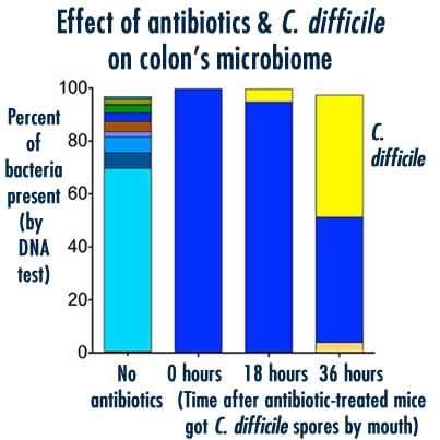 C difficile microbiome