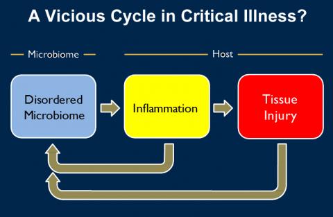 Dysbiosis in critical illness