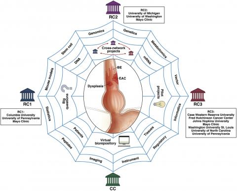 Barrett's Esophagus Translational Research Network (BETRNet):