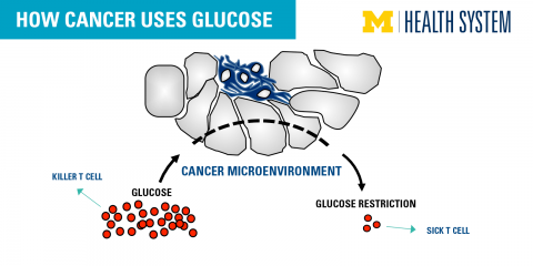 Image result for image of glucose and cancer