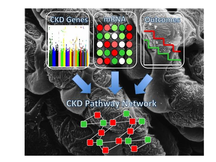 Graphic CKD pathway